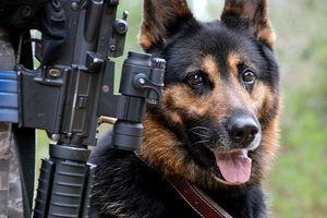Fungal Håravfall i Dogs