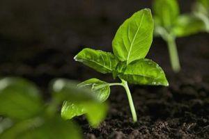 Hva er de to faktorene som påvirker Hvilke typer planter vokser i en Biom?