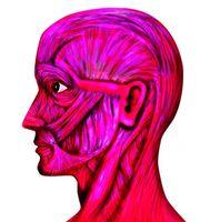Ansikts omskolering Øvelser