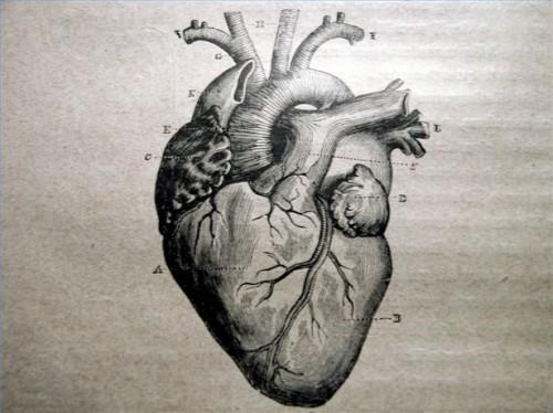 Lysin og hjertesykdom