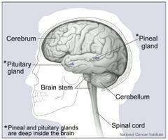 Tegn og symptomer på Fluid på hjernen