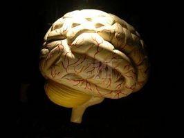 Virkningene av Anesthesia på hjernen