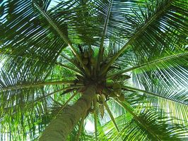 Coconut & Crohns sykdom