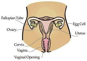 Effekter av lavt testosteron hos kvinner