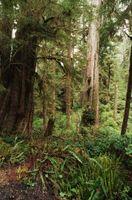 Rain Forest Urter