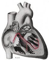 Grunner for hjerte hjertebank