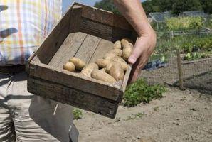 Hva skjer med poteter når De er utelatt?