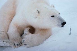 Truede arter og årsakene til Extinction