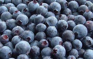 Blueberry Helse Fordeler