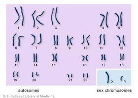 Hva er kromosom