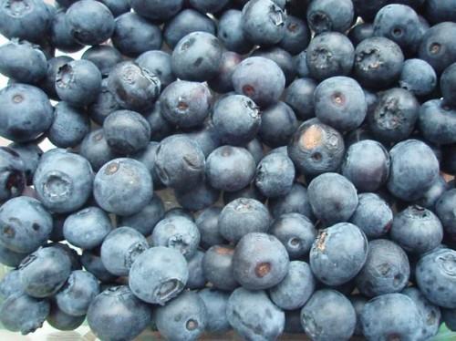 Blåbær Supplement bivirkninger