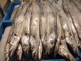 Hva Organ Har Fish Oil kommer fra?