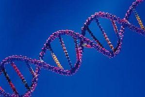 Hva er noen kjennetegn av DNA?