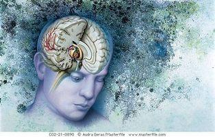 Hva Urter Hjelp Stabil Serotonin