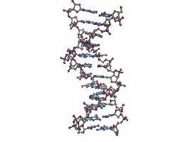 Hvordan er DNA fingerprinting gjort?