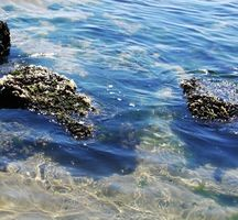 Hva er økologisk Spirulina?