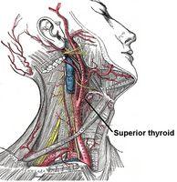 Ernæring for Hypotyreose
