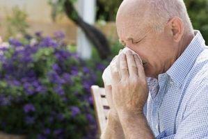 kommer pollen inn i blodet ved pollenallergi