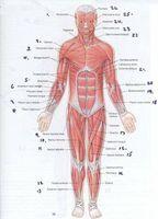 Legemidler mot muskelspasmer