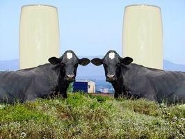Bovine Growth Hormone i Milk