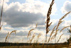 FDA Whole Grain Forskrift