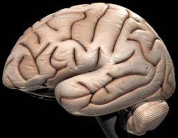 Hjernesvulst symptomer hos voksne