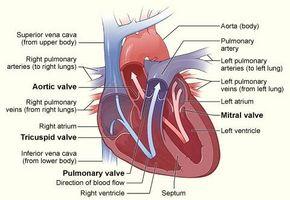 Symptomer på en lekker hjertet ventil