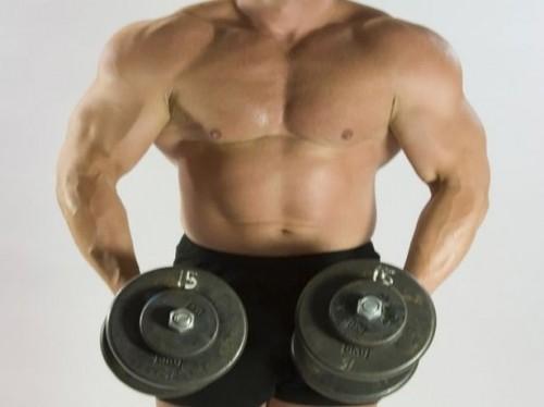 Myostatin & Muscle Vekst