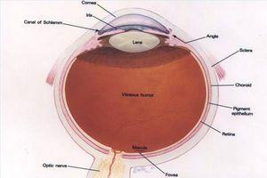 Botemidler for glaukom