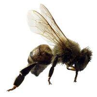 Hvordan behandle insektbitt og stikk