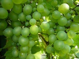 Hva er den Grønnsaker og frukter som vokser i California?