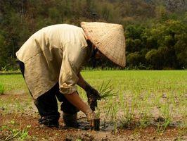 Helsemessige fordeler av Rice