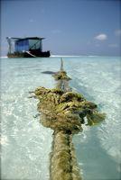 Hva er fordelene med Sea grønnsaker?