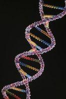 6 Kilder til DNA hos mennesker