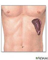 Hva gjør Spleen Do?