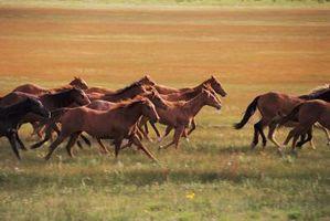 Terapeutiske Horse Grants