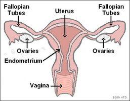 Endringer i livmoren under perimenopause