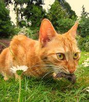 Kiselgur Flea Control for Cats