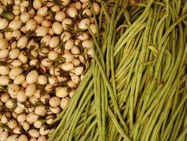 Gode kilder til Plant Protein