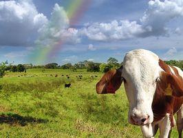 Forskjellen mellom Grass Fed Beef & Grain Fed Beef