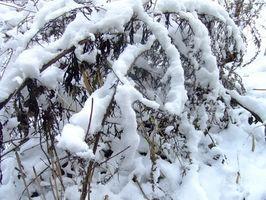 Hvordan holde seg varm og sunn in the Snow
