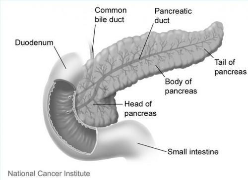 End stadier av kreft i bukspyttkjertelen