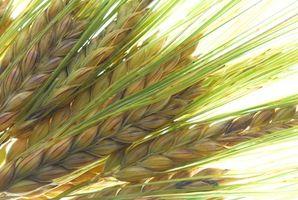 Produksjon informasjon om Barley Grass