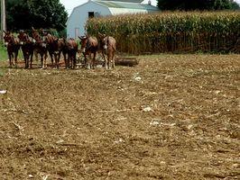 Positivt og ulemper med økologisk landbruk