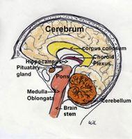 Effekter av bipolar lidelse på hjernen