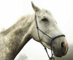 Fordeler med flytende klorofyll for Horses