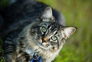 Psykologiske Tegn på kattehamstring
