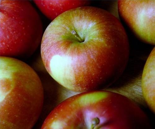 Hvordan å miste vekt Tar eple cider eddik piller