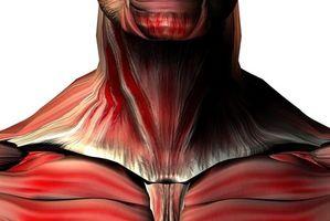 Øvelser for de viktigste musklene i nakken