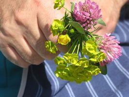 Blomster brukt for Homeopatiske Formål